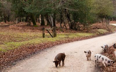 Analizamos el ciclo de vida del jamón de Teruel