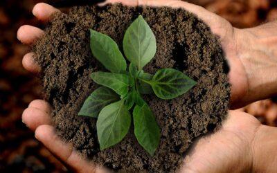 El planeta agota hoy todos los recursos naturales que es capaz de regenerar en un año