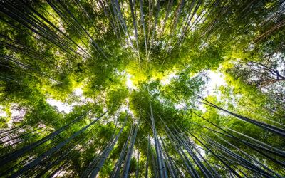 Taxonomía verde: el camino hacia las finanzas sostenibles